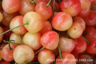 直销徂徕山樱桃 营养丰富 自产自销大樱桃 新鲜水果预售 大田樱桃