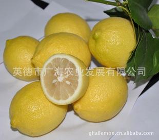 安岳尤力克柠檬品种 新鲜柠檬 黄柠檬  柠檬批发 8月20发货
