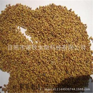 进口高产牧草种子,紫花苜蓿种子,高产、高发芽率