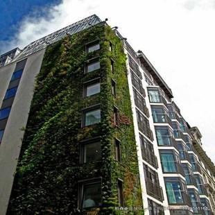 植物墙 垂直植物墙 垂直绿化植物墙 雾培垂直绿化植物墙