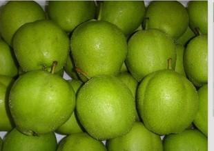 批发陕西早酥梨,酥梨价格,销售酥梨