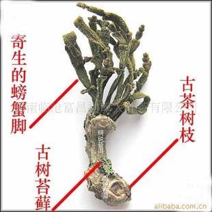 云南普洱茶 2010年正宗景迈山古茶树螃蟹脚品