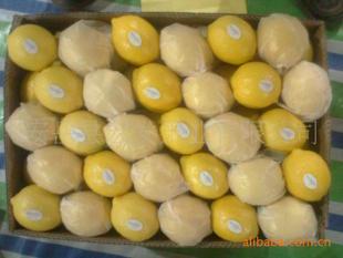 供应出口柠檬
