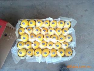 大量供应出口级别新鲜柠檬