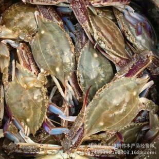 鲜活梭子蟹批发,海洋蟹,石头蟹,养殖蟹,供应各种海鲜|酒店图片