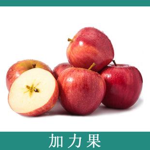 新鲜进口苹果 香脆爽甜多汁智利加力果苹果 苹果批发 水果
