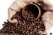供应一个大柜的咖啡豆进口到上海的费用多少?