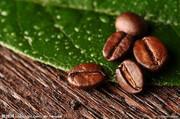 提供服务供应上海咖啡进口需要什么资料?时间多久?