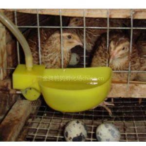 供应优质鹌鹑苗、金腾鹌鹑孵化场