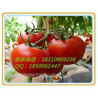 供应蔬菜种子_番茄种子_进口蔬菜种子公司