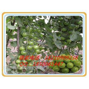 供应樱桃西红柿种子/番茄种子/西红柿种子/小番茄种子-北京维利亚种业