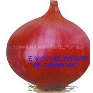 供应红皮洋葱种子|洋葱种子价格|洋葱种子批发|洋葱种子火爆促销中