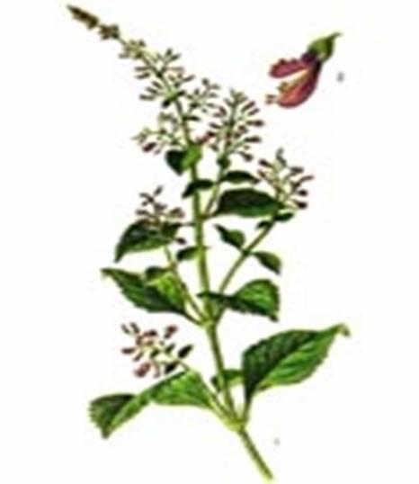 冬凌草提取物中药提取物植物提取物植物提取物厂家