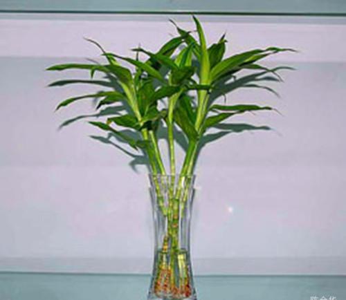 幼儿竹子颜料画图片