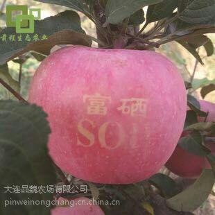 销售富硒SOD苹果,农场自产,价格可电议!