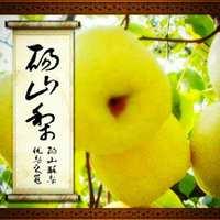 父母自家地里种的砀山酥梨,甘甜可口!!!好吃!好吃!好吃!
