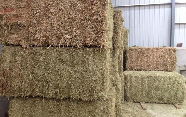 苜蓿草块苜蓿草颗粒苜蓿草捆苜蓿草粉