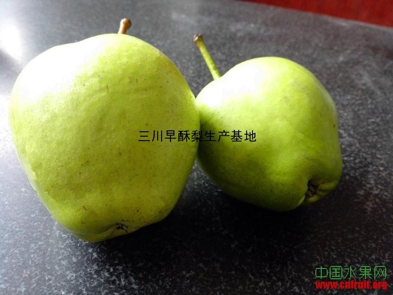 山东早酥梨基地大量供应早酥梨