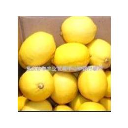 安岳尤力克柠檬鲜果供应价格(图)