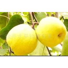 红富士苹果,砀山酥梨,黄桃罐头代理加盟