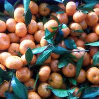 正宗南丰蜜桔 砂糖橘 柑橘 新鲜水果 产地直销 现摘现卖 特价批发
