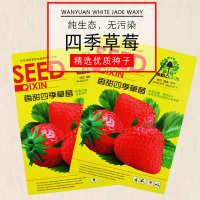 SEED香甜四季草莓赏草莓种子小包装 盆栽草莓水果种子 不包邮