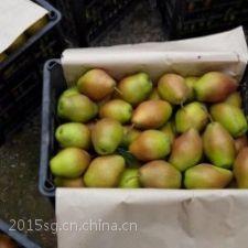 陕西酥梨产地直销价格大量供应