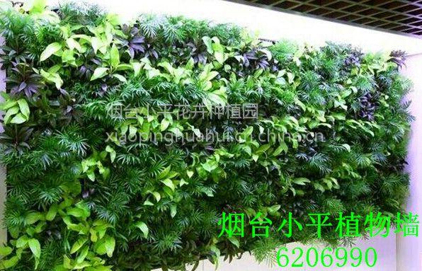 烟台墙体绿化 立体绿化 室内外垂直绿化 墙面绿化