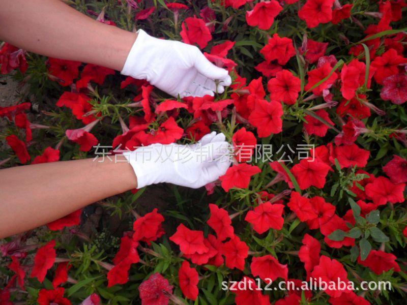 供应中国***专业手套涤棉手套棉毛手套加条手套