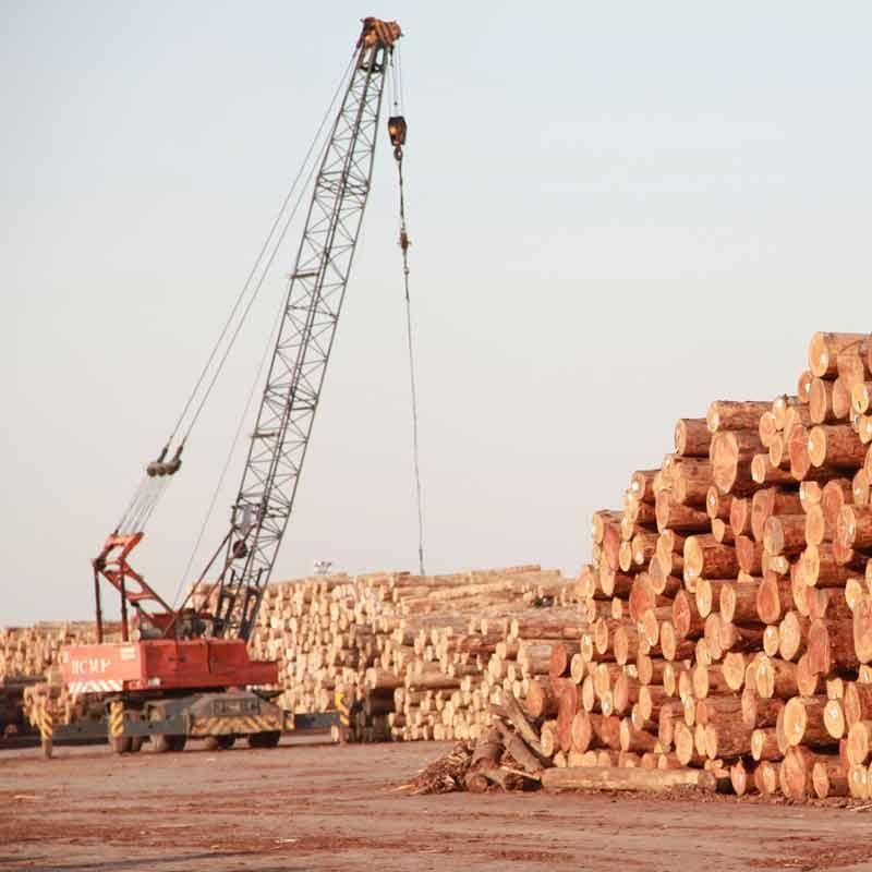 供应供应进口原木各种木材