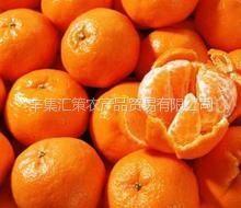 供应南方正宗砂糖橘