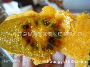 五叶木通(九月黄)黄金蕉
