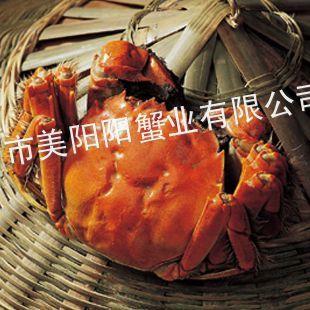 供应巴城阳澄湖大闸蟹母螃蟹2.2-2.4两原产地直销特价