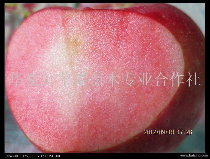 供应M9T337|红色苹果|红瓤苹果|红苹果苗木|红色之爱红瓤苹果苗木专业合作社