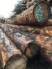 凝戎原木细纹铁杉原木板材古建筑木材定制原木加工质量保证欢迎来电咨询