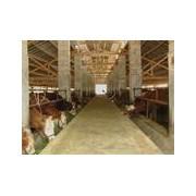 山西牲畜交易市场欢迎您招聘经纪人
